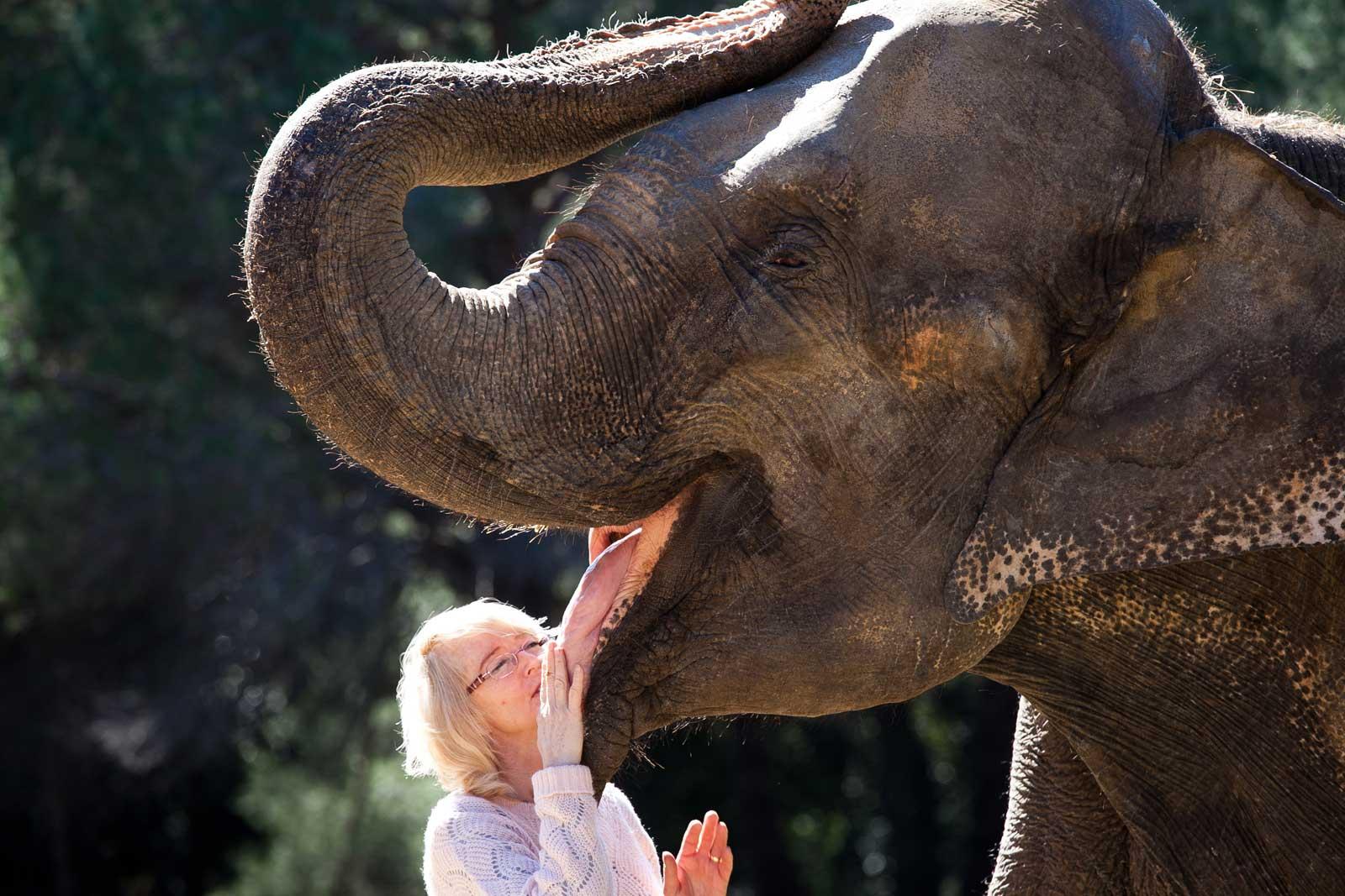 Yvonne Kludsky , ensinistradora d'elefants , amb la Dumba